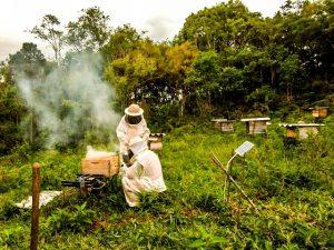 Epagri/Ciram realiza vistoria nas estações de monitoramento apícola